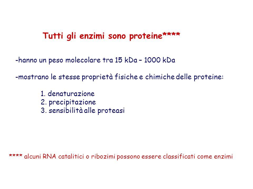 Tutti gli enzimi sono proteine**** **** alcuni RNA catalitici o ribozimi possono essere classificati come enzimi -hanno un peso molecolare tra 15 kDa