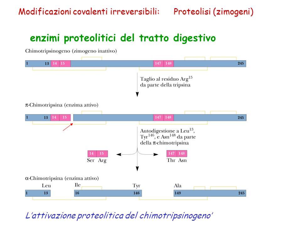 enzimi proteolitici del tratto digestivo Lattivazione proteolitica del chimotripsinogeno Modificazioni covalenti irreversibili: Proteolisi (zimogeni)