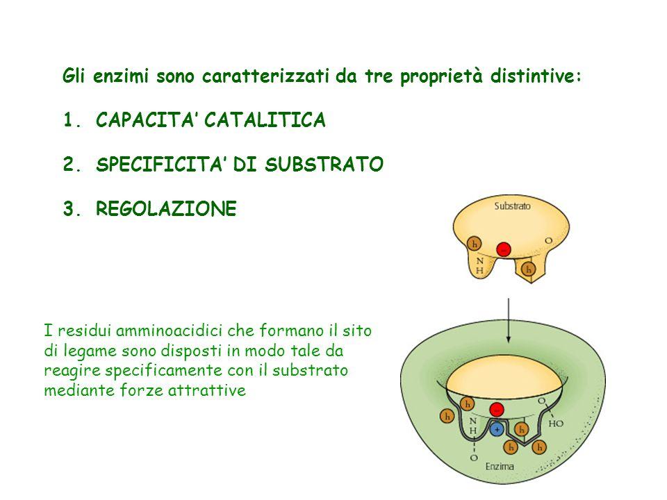Gli enzimi sono caratterizzati da tre proprietà distintive: 1.CAPACITA CATALITICA 2.SPECIFICITA DI SUBSTRATO 3.REGOLAZIONE I residui amminoacidici che