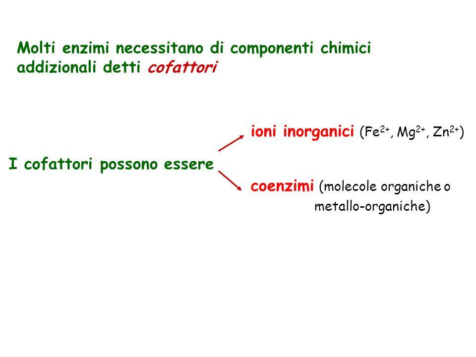Molti enzimi necessitano di componenti chimici addizionali detti cofattori I cofattori possono essere ioni inorganici (Fe 2+, Mg 2+, Zn 2+ ) coenzimi