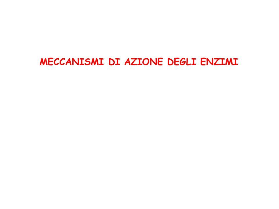 MECCANISMI DI AZIONE DEGLI ENZIMI