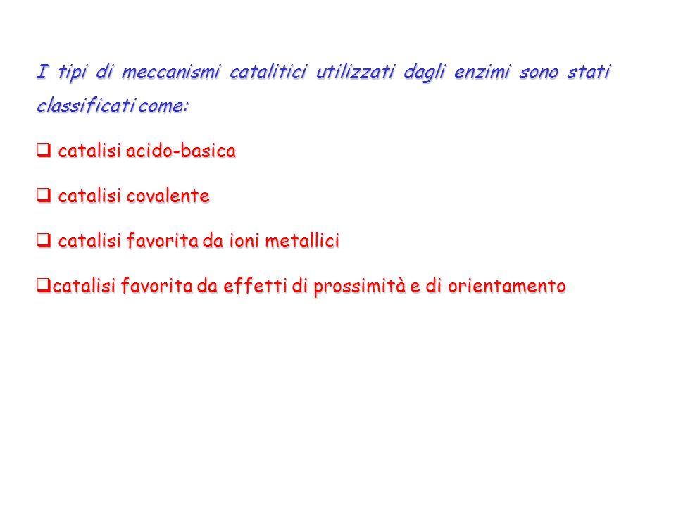 I tipi di meccanismi catalitici utilizzati dagli enzimi sono stati classificati come: catalisi acido-basica catalisi acido-basica catalisi covalente c