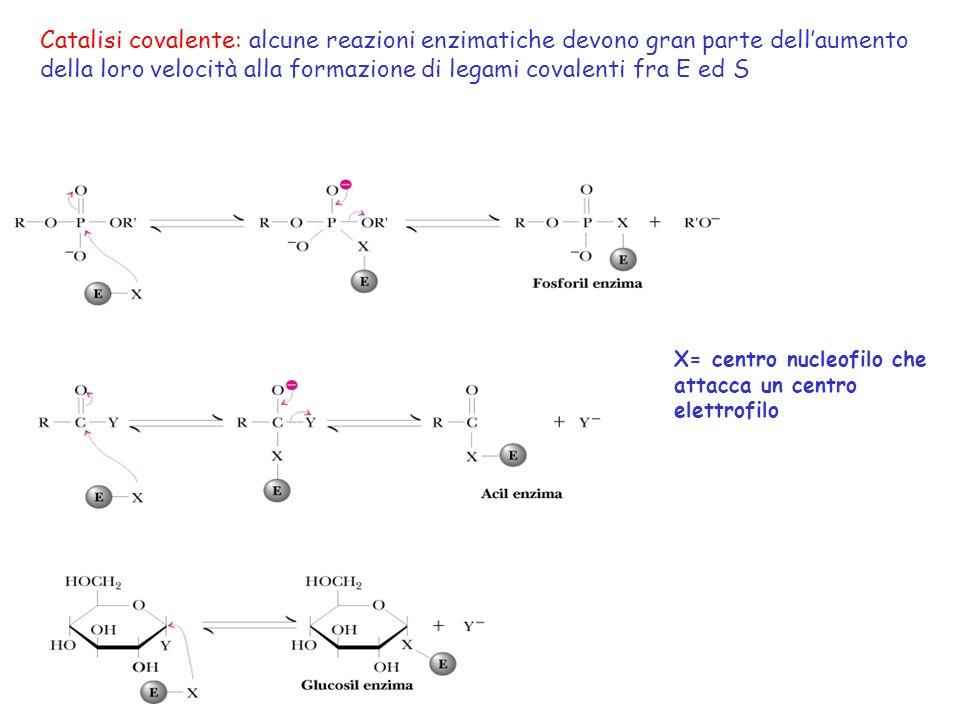 Catalisi covalente: alcune reazioni enzimatiche devono gran parte dellaumento della loro velocità alla formazione di legami covalenti fra E ed S X= ce