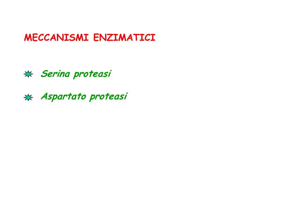 MECCANISMI ENZIMATICI Serina proteasi Aspartato proteasi