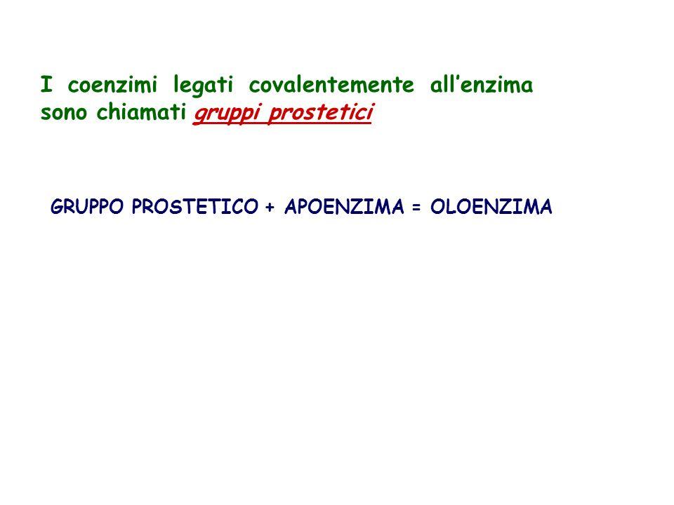 I coenzimi legati covalentemente allenzima sono chiamati gruppi prostetici GRUPPO PROSTETICO + APOENZIMA = OLOENZIMA