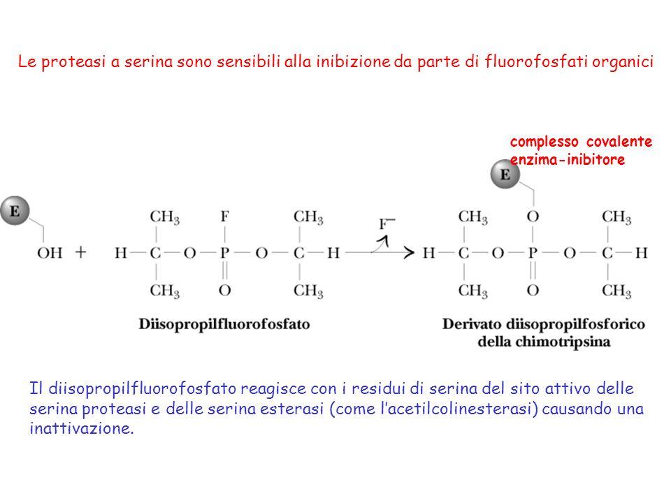 Il diisopropilfluorofosfato reagisce con i residui di serina del sito attivo delle serina proteasi e delle serina esterasi (come lacetilcolinesterasi)