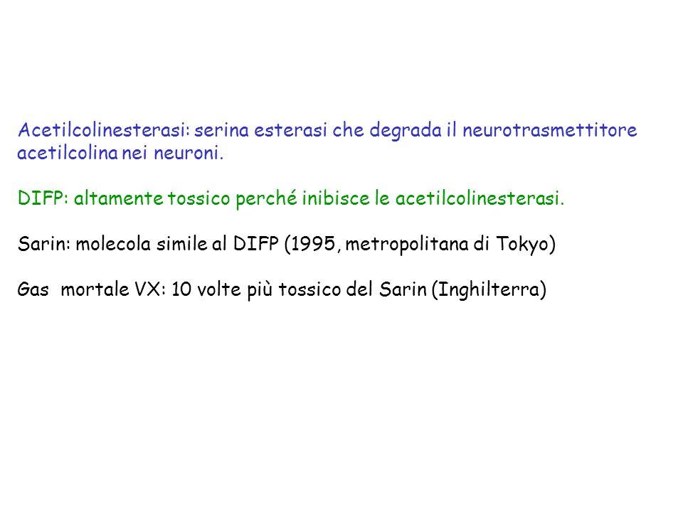Acetilcolinesterasi: serina esterasi che degrada il neurotrasmettitore acetilcolina nei neuroni. DIFP: altamente tossico perché inibisce le acetilcoli