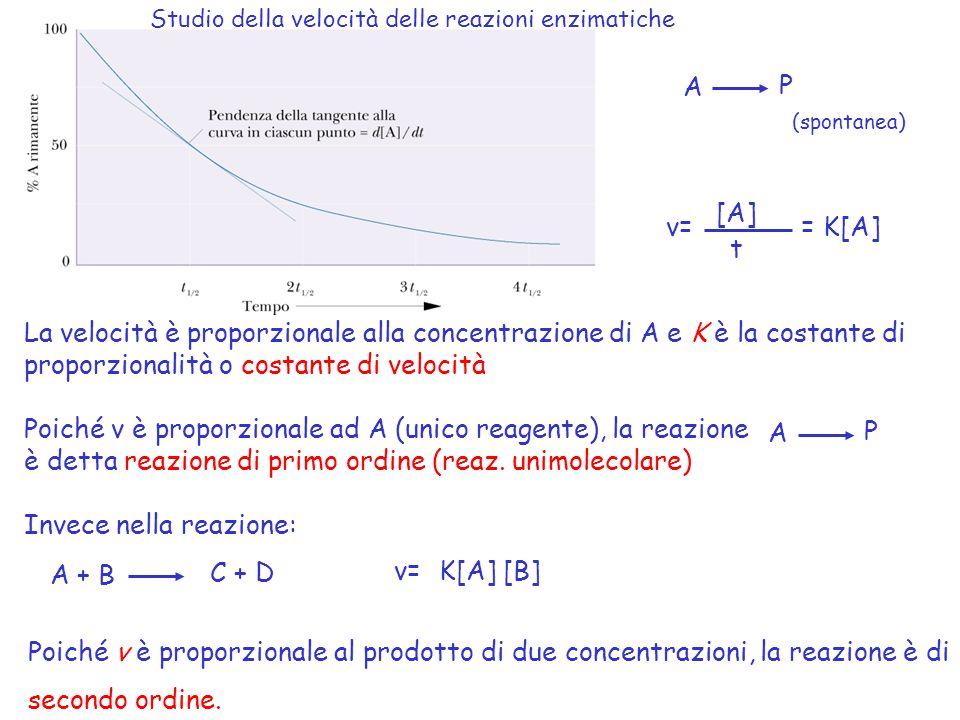 A P (spontanea) [A] t v== K[A] La velocità è proporzionale alla concentrazione di A e K è la costante di proporzionalità o costante di velocità Poiché