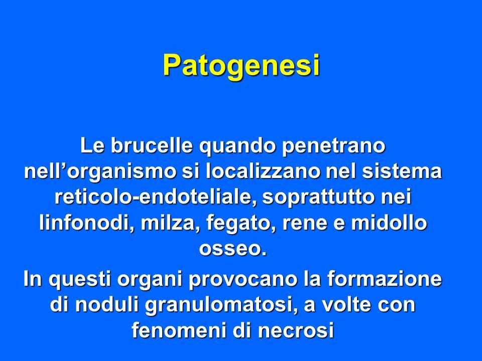 Patogenesi Le brucelle quando penetrano nellorganismo si localizzano nel sistema reticolo-endoteliale, soprattutto nei linfonodi, milza, fegato, rene