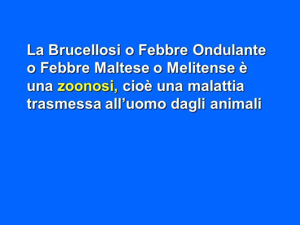 La Brucellosi o Febbre Ondulante o Febbre Maltese o Melitense è una zoonosi, cioè una malattia trasmessa alluomo dagli animali