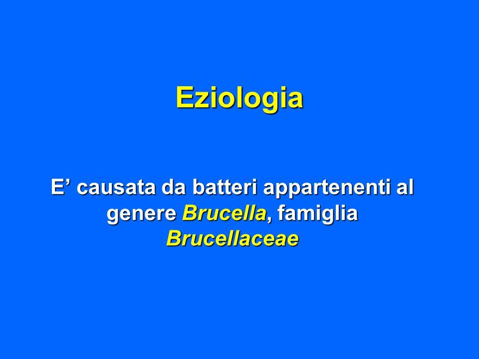 Eziologia E causata da batteri appartenenti al genere Brucella, famiglia Brucellaceae
