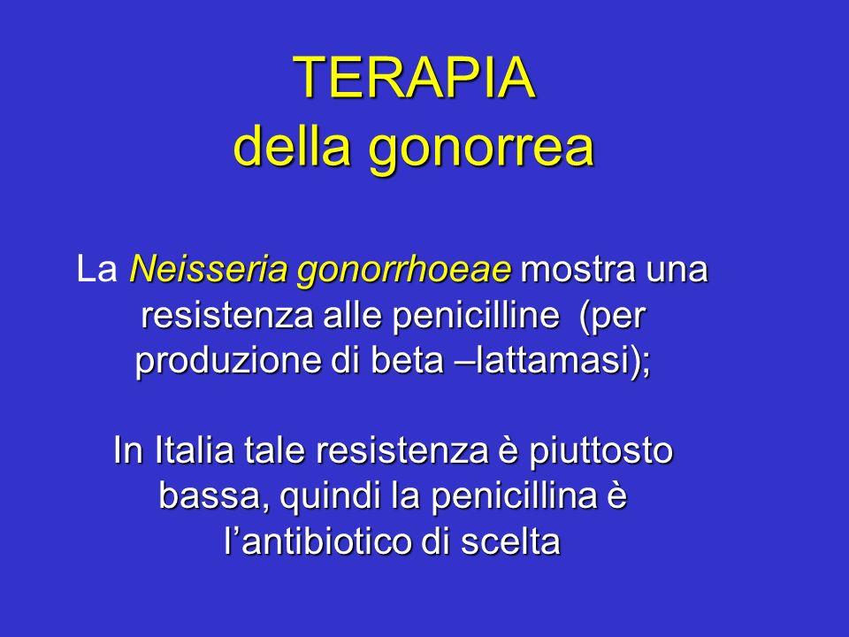TERAPIA della gonorrea Neisseria gonorrhoeae mostra una resistenza alle penicilline (per produzione di beta –lattamasi); La Neisseria gonorrhoeae most