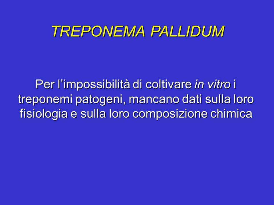 TREPONEMA PALLIDUM Per limpossibilità di coltivare in vitro i treponemi patogeni, mancano dati sulla loro fisiologia e sulla loro composizione chimica