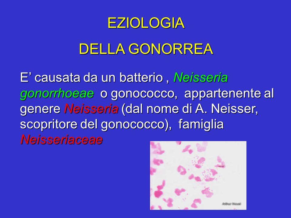 EZIOLOGIA DELLA GONORREA E causata da un batterio, Neisseria gonorrhoeae o gonococco, appartenente al genere Neisseria (dal nome di A. Neisser, scopri