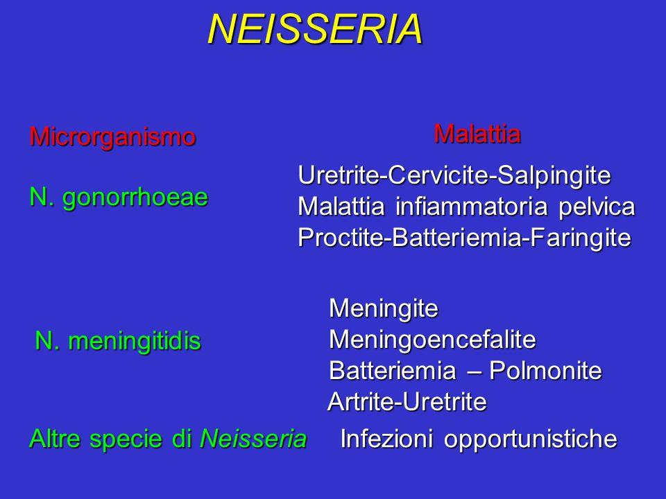 NEISSERIA N. gonorrhoeae Microrganismo Malattia Uretrite-Cervicite-Salpingite Uretrite-Cervicite-Salpingite Malattia infiammatoria pelvica Malattia in