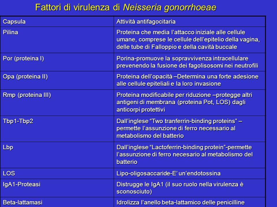 Fattori di virulenza di Neisseria gonorrhoeae Capsula Attività antifagocitaria Pilina Proteina che media lattacco iniziale alle cellule umane, compres