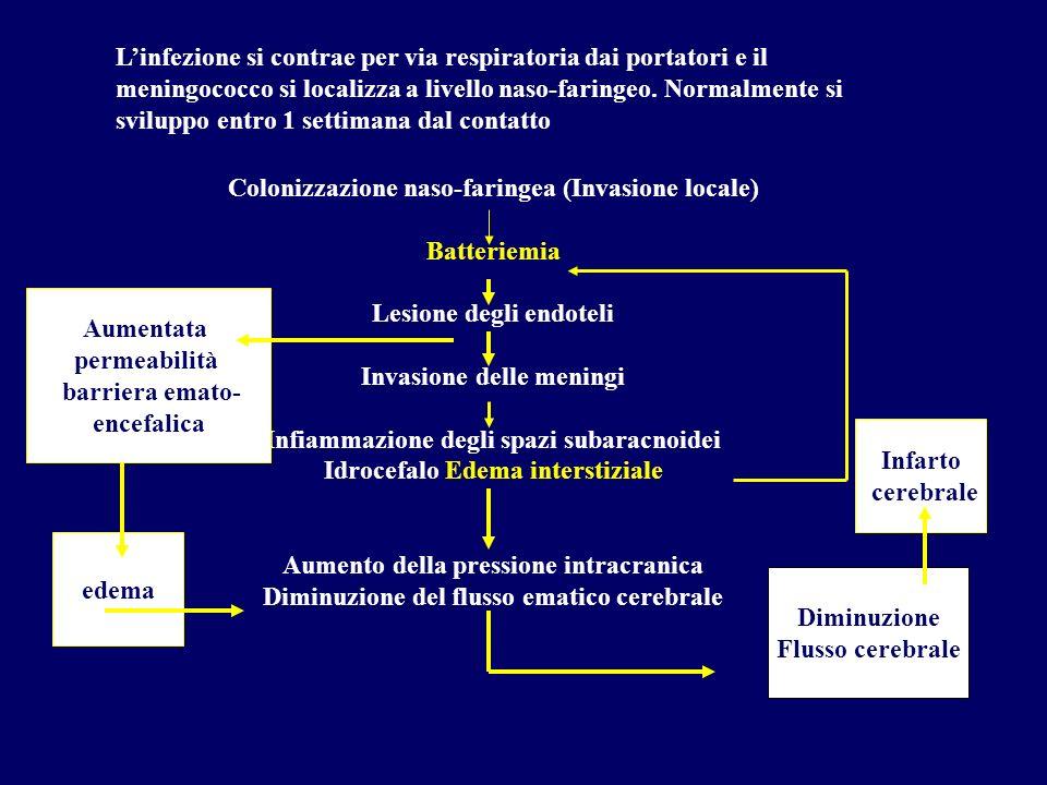 Linfezione si contrae per via respiratoria dai portatori e il meningococco si localizza a livello naso-faringeo. Normalmente si sviluppo entro 1 setti