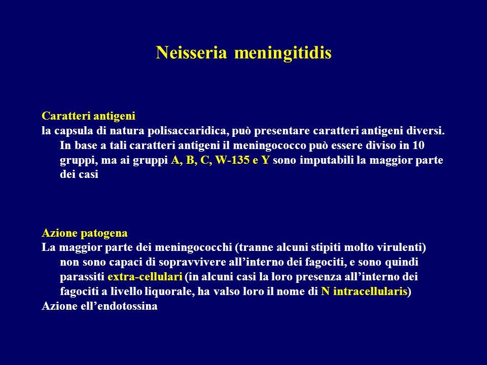 Neisseria meningitidis Caratteri antigeni la capsula di natura polisaccaridica, può presentare caratteri antigeni diversi. In base a tali caratteri an