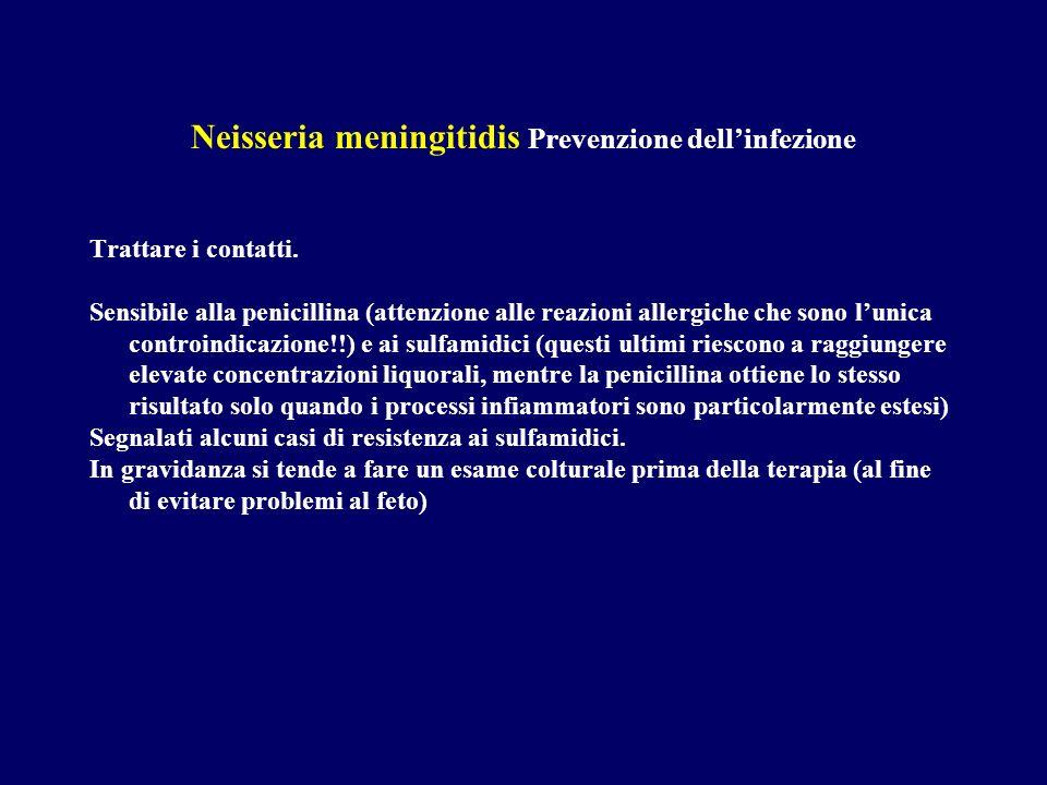 Neisseria meningitidis Prevenzione dellinfezione Trattare i contatti. Sensibile alla penicillina (attenzione alle reazioni allergiche che sono lunica