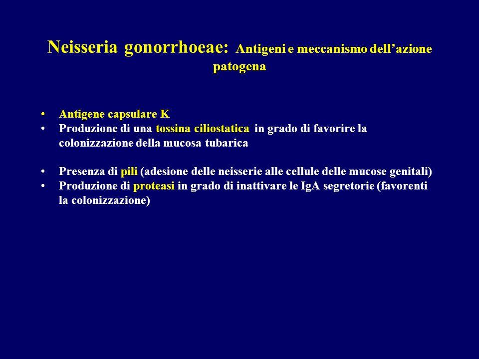 Neisseria gonorrhoeae: Antigeni e meccanismo dellazione patogena Antigene capsulare K Produzione di una tossina ciliostatica in grado di favorire la c