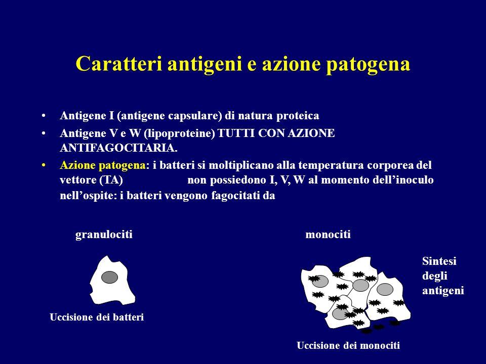 Caratteri antigeni e azione patogena Antigene I (antigene capsulare) di natura proteica Antigene V e W (lipoproteine) TUTTI CON AZIONE ANTIFAGOCITARIA