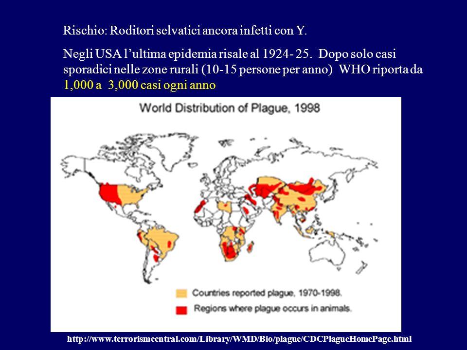 Rischio: Roditori selvatici ancora infetti con Y. Negli USA lultima epidemia risale al 1924- 25. Dopo solo casi sporadici nelle zone rurali (10-15 per