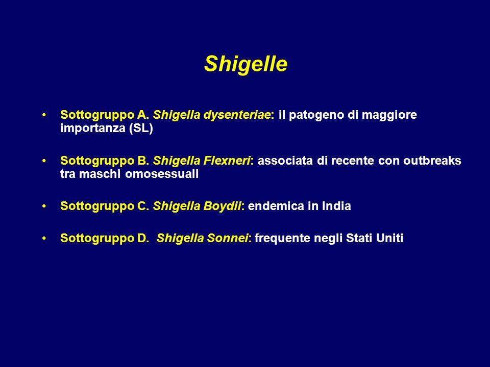 Shigelle Sottogruppo A. Shigella dysenteriae: il patogeno di maggiore importanza (SL) Sottogruppo B. Shigella Flexneri: associata di recente con outbr
