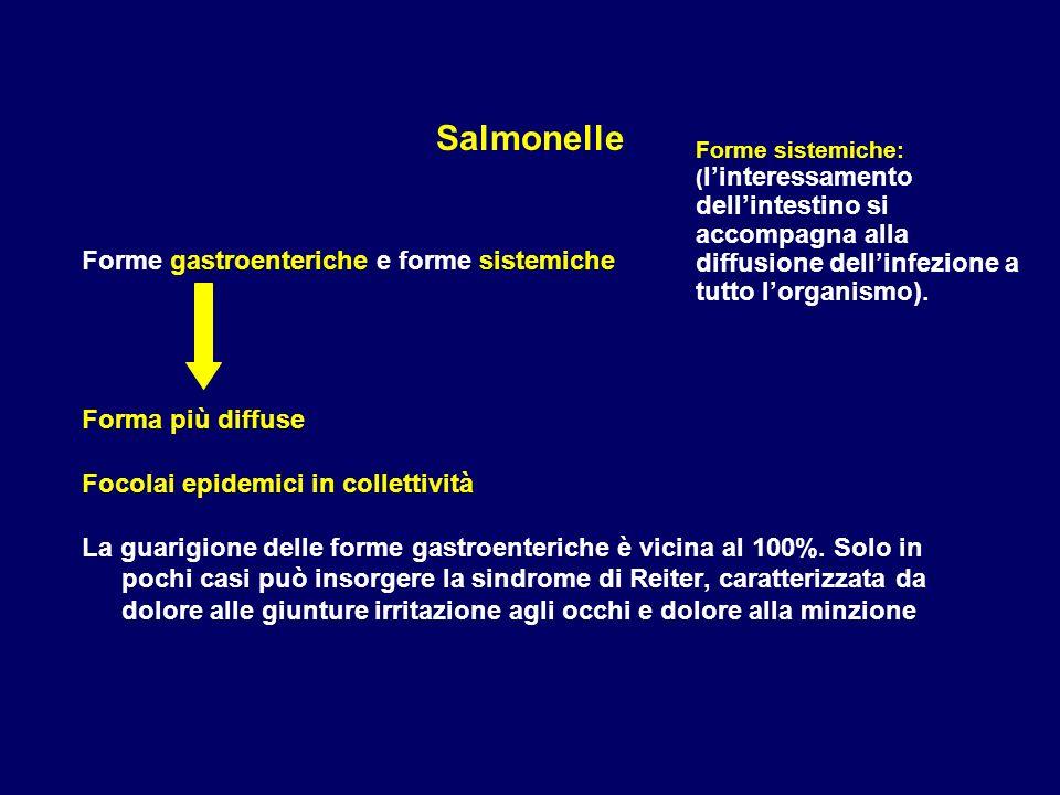 Salmonelle Forme gastroenteriche e forme sistemiche Forma più diffuse Focolai epidemici in collettività La guarigione delle forme gastroenteriche è vi