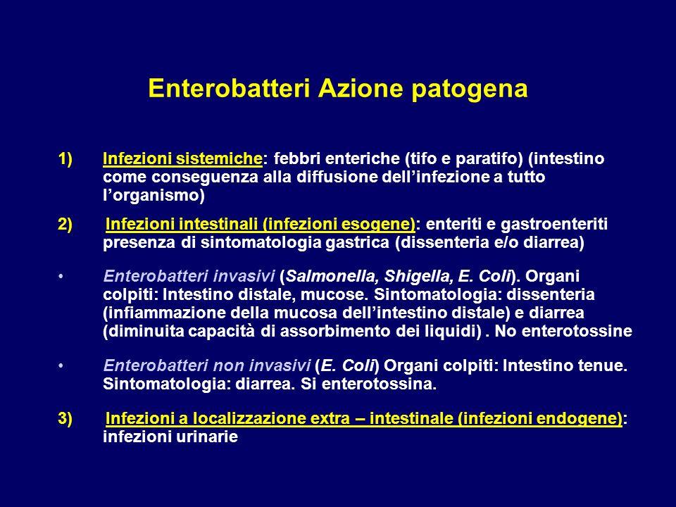 Enterobatteri Azione patogena 1)Infezioni sistemiche: febbri enteriche (tifo e paratifo) (intestino come conseguenza alla diffusione dellinfezione a t