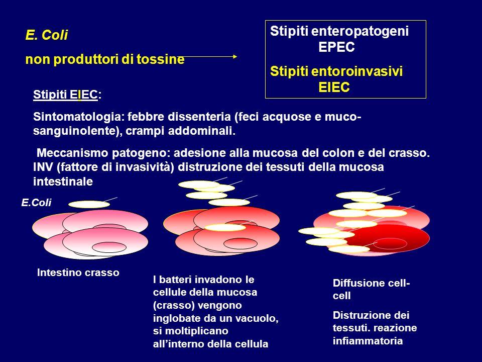 Stipiti enteropatogeni EPEC Stipiti entoroinvasivi EIEC E. Coli non produttori di tossine Stipiti EIEC: Sintomatologia: febbre dissenteria (feci acquo
