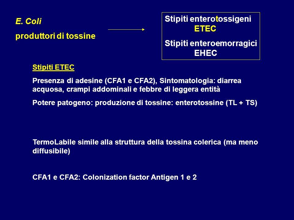 Stipiti enterotossigeni ETEC Stipiti enteroemorragici EHEC E. Coli produttori di tossine Stipiti ETEC Presenza di adesine (CFA1 e CFA2), Sintomatologi