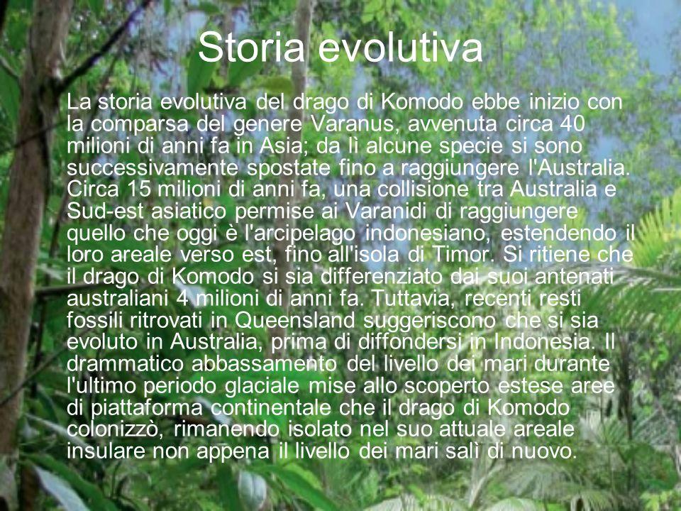 Storia evolutiva La storia evolutiva del drago di Komodo ebbe inizio con la comparsa del genere Varanus, avvenuta circa 40 milioni di anni fa in Asia;