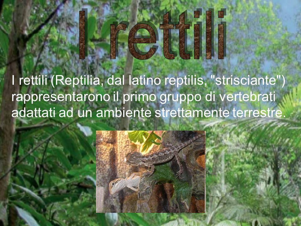 I rettili (Reptilia, dal latino reptilis,