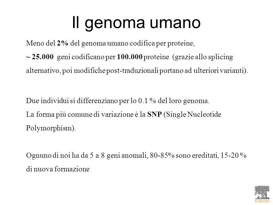 Meno del 2% del genoma umano codifica per proteine, ~ 25.000 geni codificano per 100.000 proteine (grazie allo splicing alternativo, poi modifiche pos