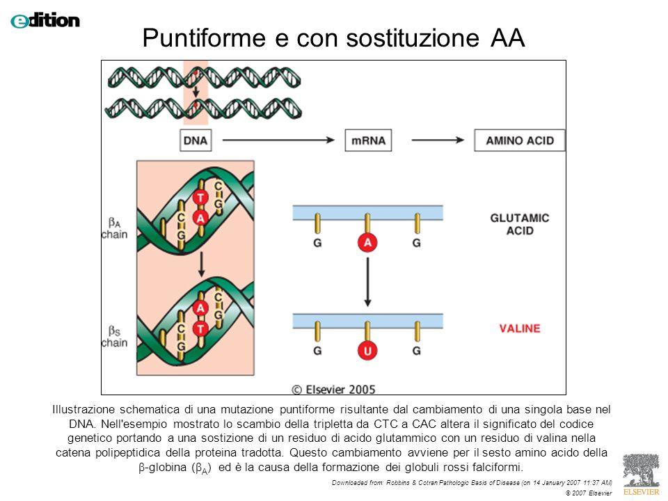 Illustrazione schematica di una mutazione puntiforme risultante dal cambiamento di una singola base nel DNA. Nell'esempio mostrato lo scambio della tr