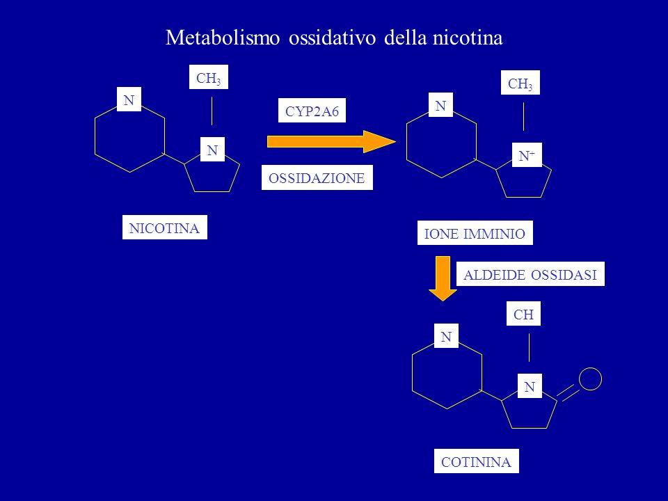 Metabolismo ossidativo della nicotina N N CH 3 N N+N+ CYP2A6 NICOTINA IONE IMMINIO OSSIDAZIONE N N CH COTININA ALDEIDE OSSIDASI