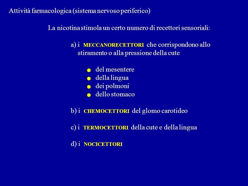 Attività farmacologica (sistema nervoso periferico) La nicotina stimola un certo numero di recettori sensoriali: a) i MECCANORECETTORI che corrispondo