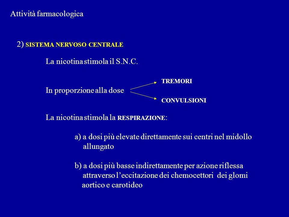 Attività farmacologica 2) SISTEMA NERVOSO CENTRALE La nicotina stimola il S.N.C. TREMORI In proporzione alla dose CONVULSIONI La nicotina stimola la R