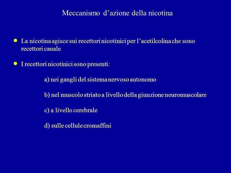 Meccanismo dazione della nicotina La nicotina agisce sui recettori nicotinici per lacetilcolina che sono recettori canale I recettori nicotinici sono