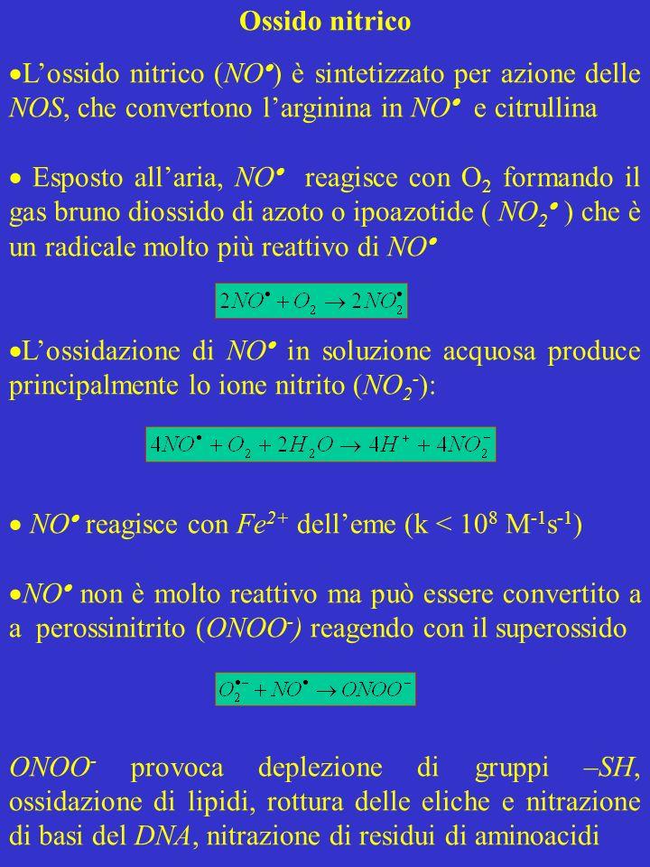 Ossido nitrico Lossido nitrico (NO ) è sintetizzato per azione delle NOS, che convertono larginina in NO e citrullina Esposto allaria, NO reagisce con