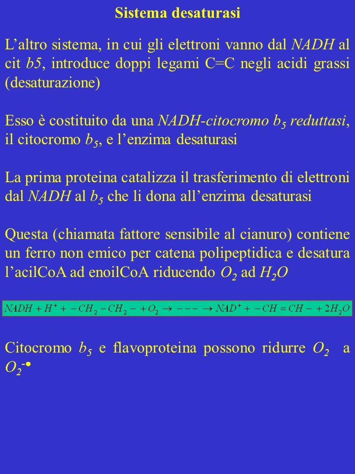 Sistema desaturasi Laltro sistema, in cui gli elettroni vanno dal NADH al cit b5, introduce doppi legami C=C negli acidi grassi (desaturazione) Esso è