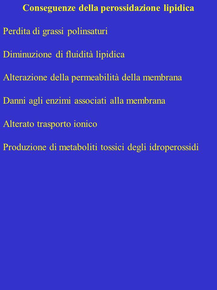 Conseguenze della perossidazione lipidica Perdita di grassi polinsaturi Diminuzione di fluidità lipidica Alterazione della permeabilità della membrana