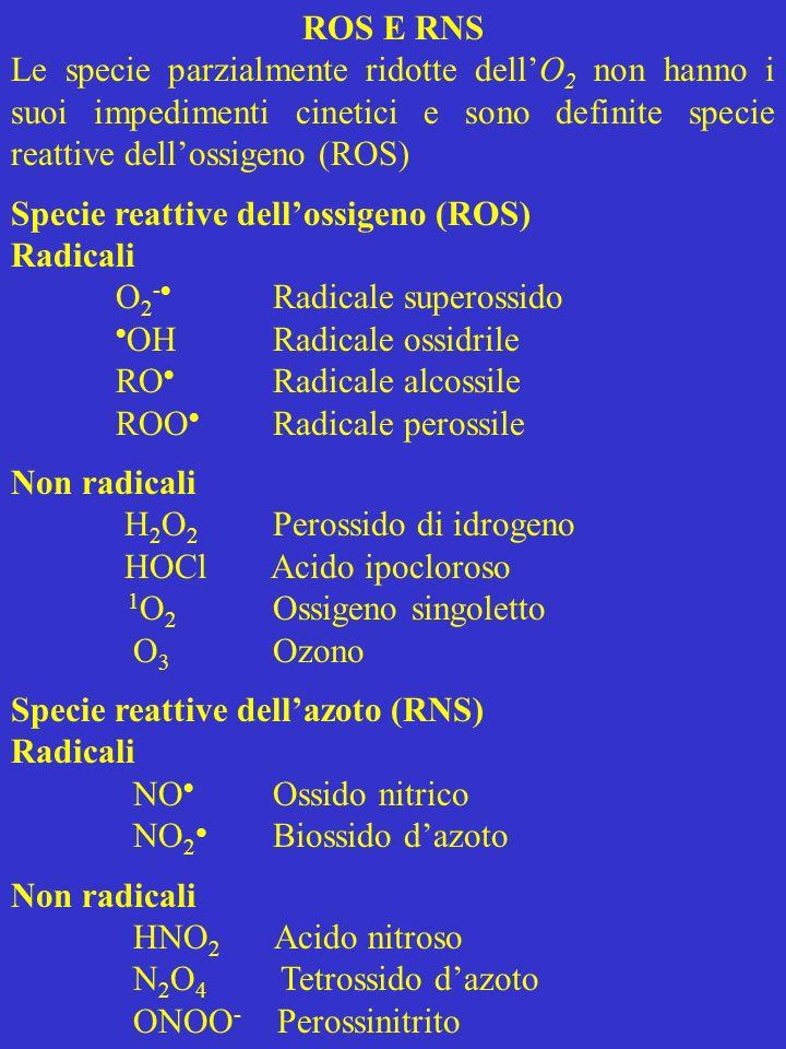 Riduzione univalente dellossigeno Nel 1954 fu proposto che gli effetti dannosi dell O 2 erano dovuti alla formazione dei suoi radicali Lipotesi, con la scoperta della SOD, portò alla teoria del superossido, secondo cui la tossicità dell O 2 era dovuta alla formazione di O 2 - e la SOD era importante per la difesa cellulare Tuttavia O 2 - non è molto aggressivo, ma può portare alla formazione di altre ROS In ambiente acido O 2 - genera H 2 O 2 per dismutazione spontanea., ma in presenza della SOD la dismutazione si verifica a velocità 10 4 volte più alta H 2 O 2 non è in grado di ossidare DNA, lipidi e la maggior parte delle proteine in ambiente acquoso