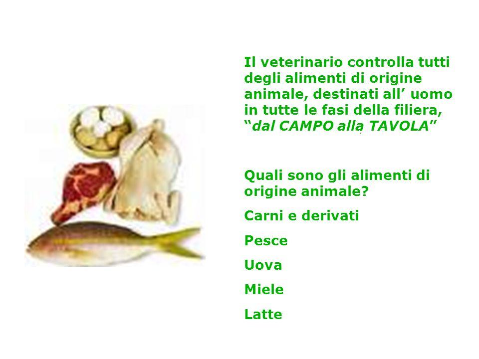 Il veterinario controlla tutti degli alimenti di origine animale, destinati all uomo in tutte le fasi della filiera,dal CAMPO alla TAVOLA Quali sono g