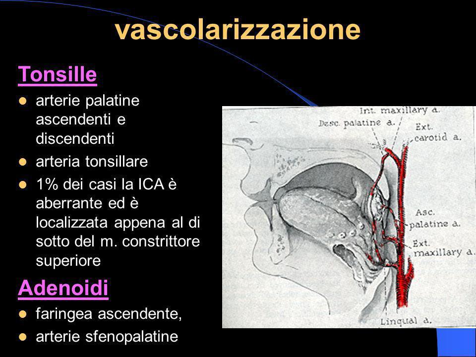 vascolarizzazione Tonsille arterie palatine ascendenti e discendenti arteria tonsillare 1% dei casi la ICA è aberrante ed è localizzata appena al di s