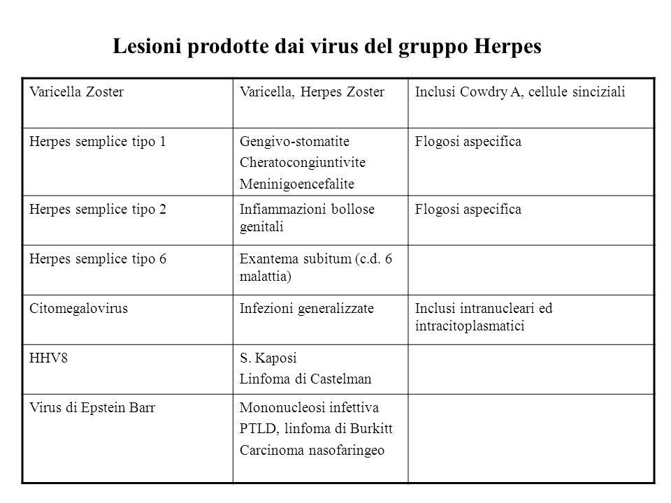 Varicella ZosterVaricella, Herpes ZosterInclusi Cowdry A, cellule sinciziali Herpes semplice tipo 1Gengivo-stomatite Cheratocongiuntivite Meninigoence