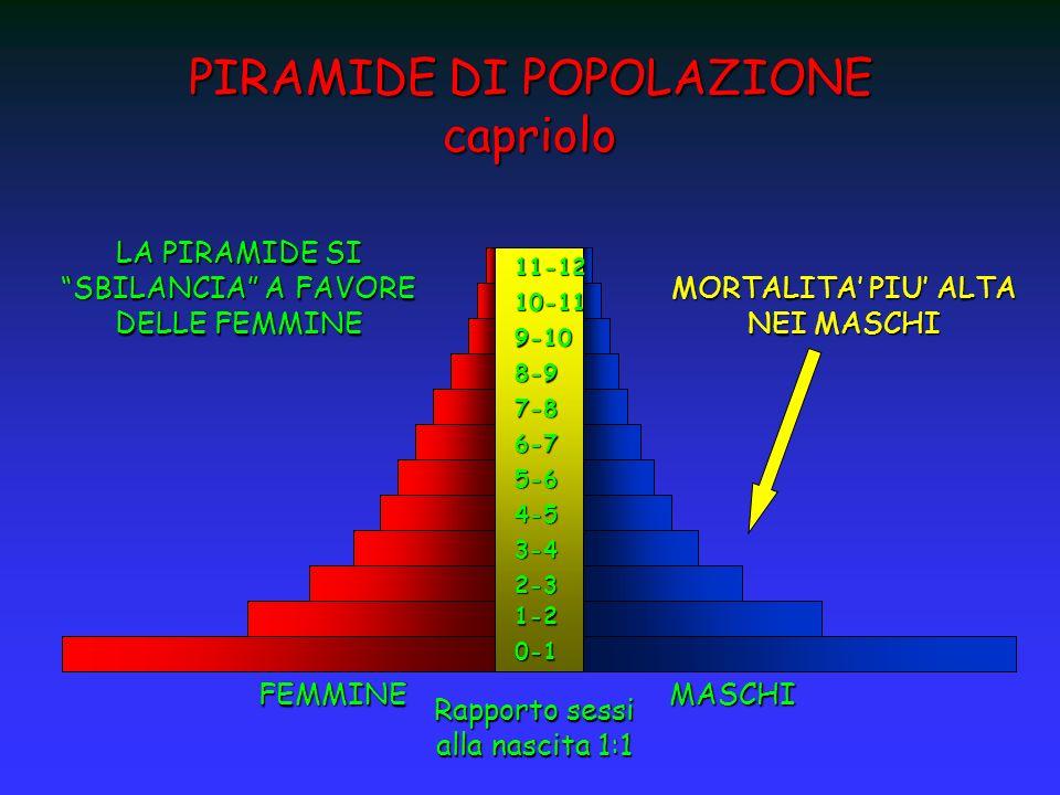 PIRAMIDE DI POPOLAZIONE capriolo 0-11-2 2-3 3-4 4-5 5-6 6-7 7-8 8-9 9-10 10-1111-12FEMMINEMASCHI Rapporto sessi alla nascita 1:1 MORTALITA PIU ALTA NE
