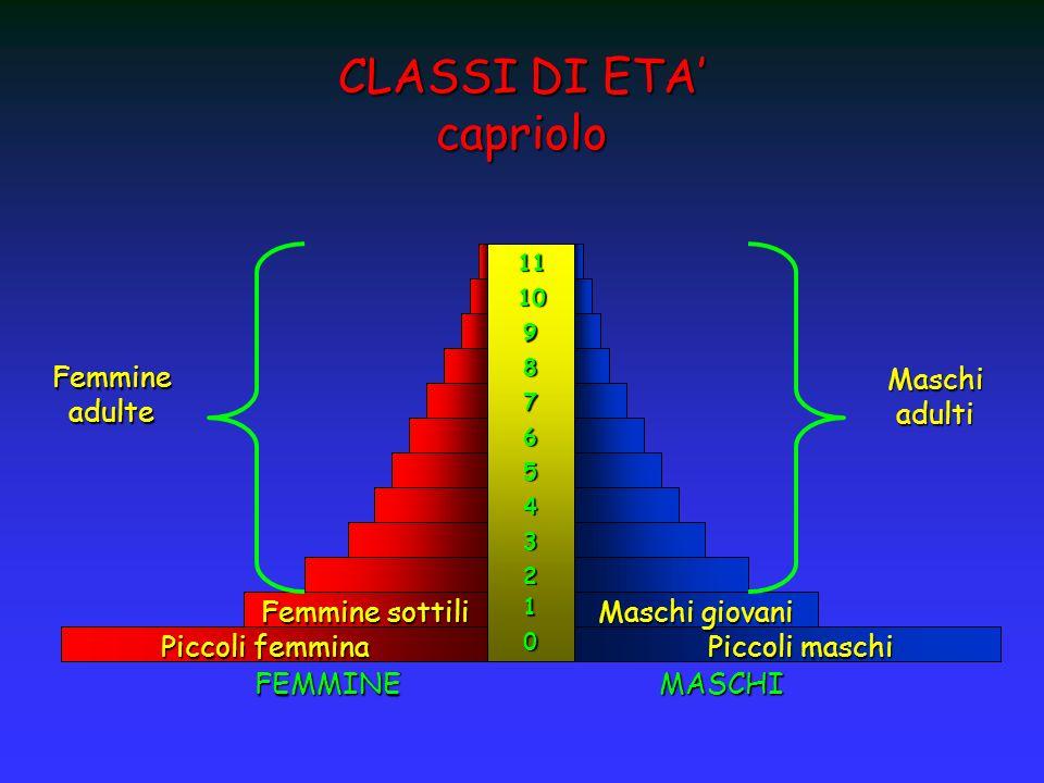 CLASSI DI ETA capriolo 0 1 2 3 4 5 6 7 8 9 10 11 FEMMINEMASCHI Femmine adulte Maschi adulti Maschi giovani Piccoli maschi Femmine sottili Piccoli femm