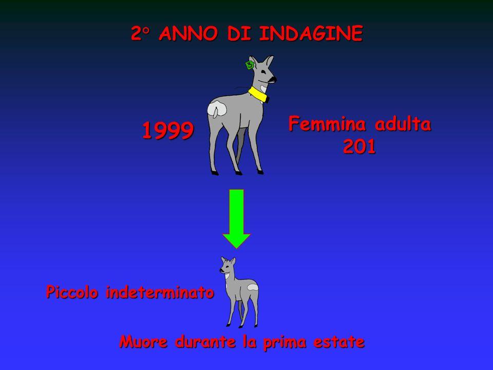 2° ANNO DI INDAGINE 1999 Piccolo indeterminato Muore durante la prima estate Femmina adulta 201
