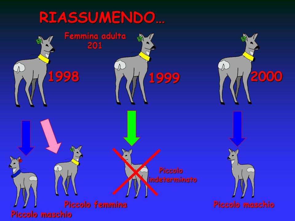 RIASSUMENDO… 1998 Piccolo maschio Femmina adulta 201 1999 2000 Piccoloindeterminato Piccolo femmina Piccolo maschio